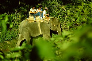 Elephant Ride Chitwan National Park.