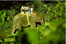 Elephant ride in the Terai in Nepal.