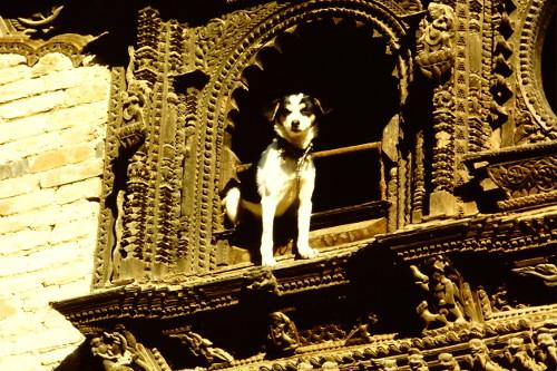 dog-and-window