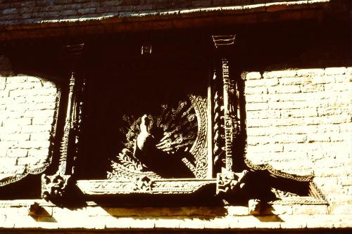 peacock-window