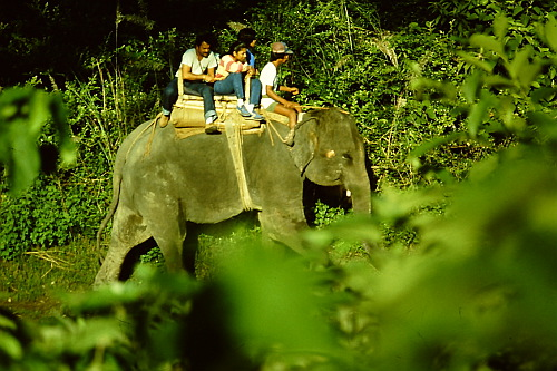 chitwan-elephant-ride