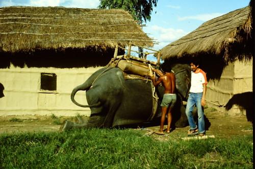 chitwan-park-elephant